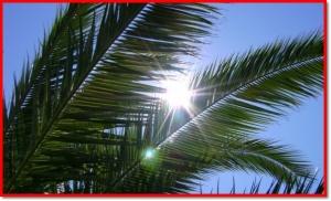 palme cv