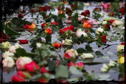 strage di rose cv