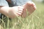 piedini