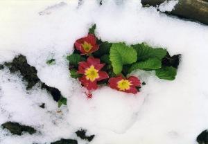 Il-fiore-della-Speranza