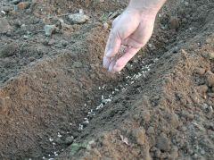 la semina