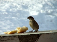 uccello non di solo pane