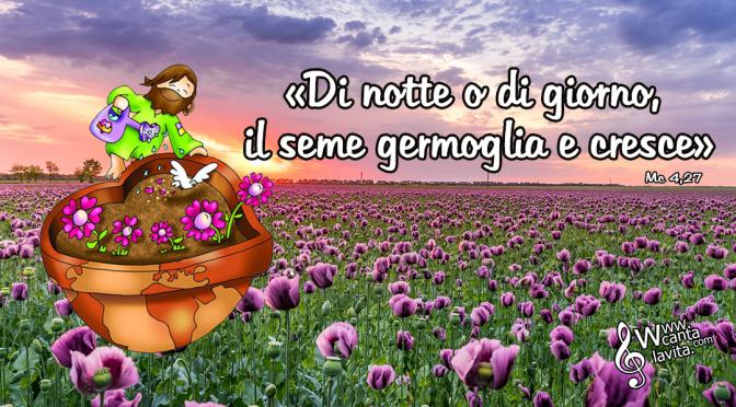 Come un seme – BUONA DOMENICA! XI DOMENICA DEL TEMPO ORDINARIO – ANNO B